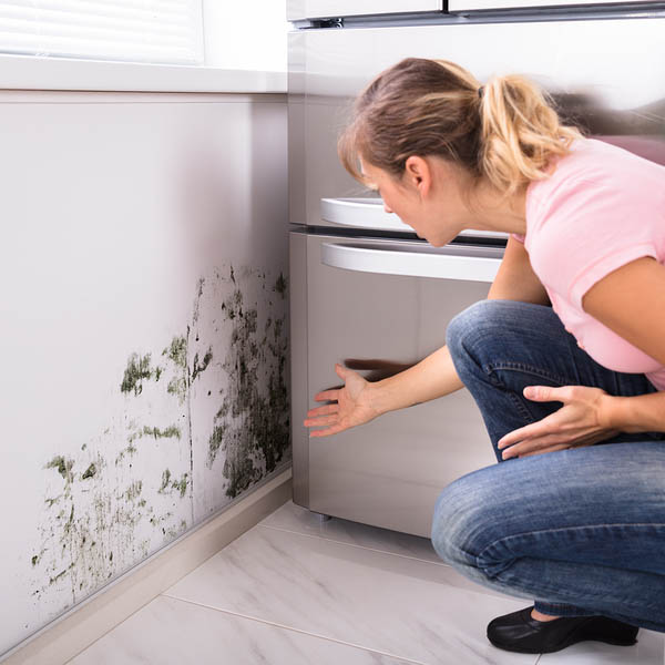 Mold Inspection & Mold Remediation Services